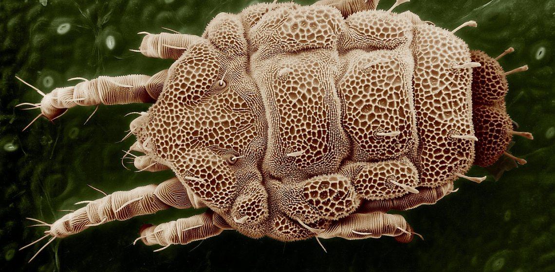 Jaki materac dla alergika